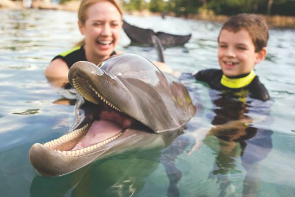 O Discovery Cove oferece contato direto com diversos animais | (c) Sea World