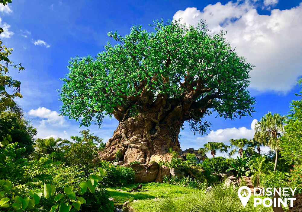 Disney Point Roteiro Completo Gratis Animal Kingdom